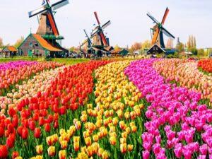 Tour Hà Lan