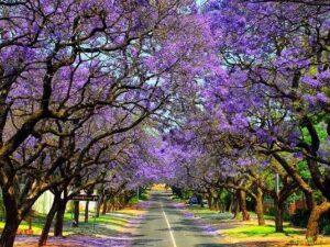 Tour Nam Phi
